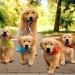 Продается сервис онлайн животных